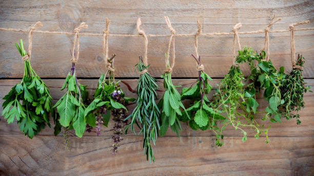 Assorted hanging herbs ,parsley ,oregano,mint,sage,rosemary,sweet basil,holy basil,  and thyme for seasoning concept on rustic old wooden background. Assorted hanging herbs ,parsley ,oregano,mint,sage,rosemary,sweet basil,holy basil,  and thyme for seasoning concept on rustic old wooden background. herbal medicine stock pictures, royalty-free photos & images