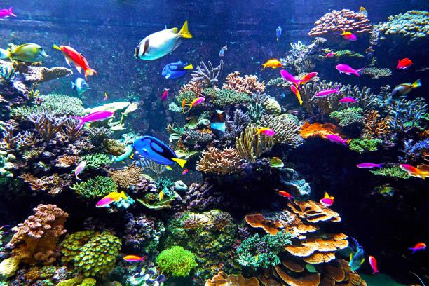 assorted kind of many fishes inside sea coral reef environment - tropikalna ryba zdjęcia i obrazy z banku zdjęć