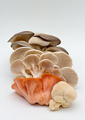 istock Assorted mushrooms fresh from farm , on white 1019020654