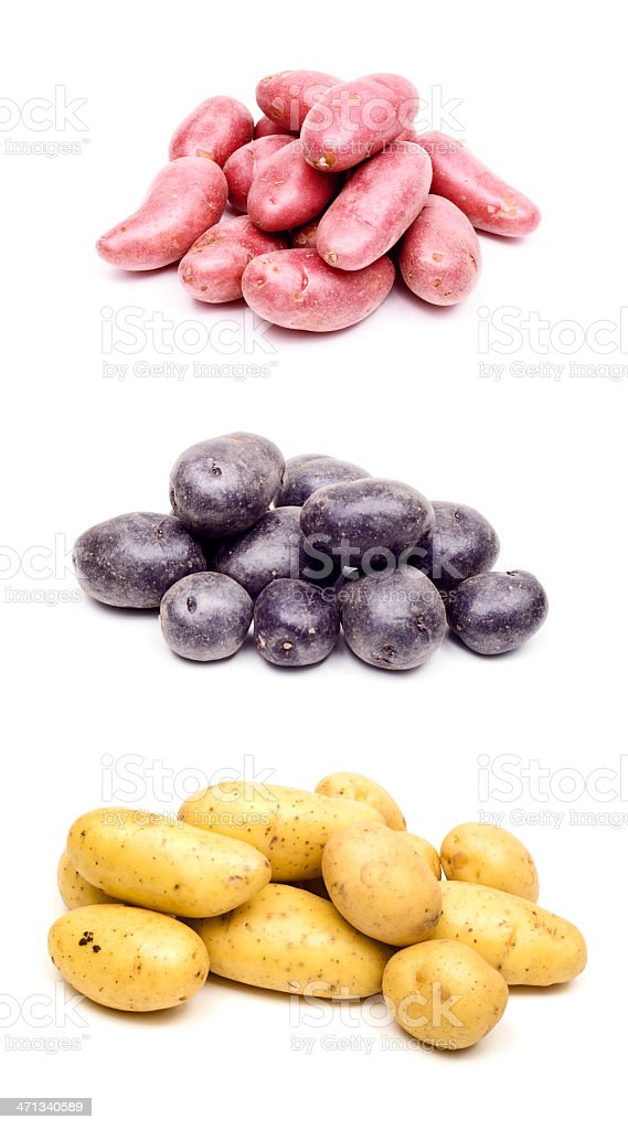 Assorted Peruvian potatoes royalty-free stock photo