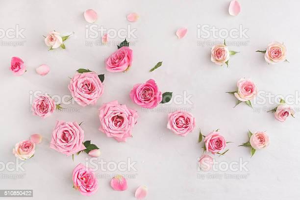 Assorted roses heads picture id510850422?b=1&k=6&m=510850422&s=612x612&h=e8v2vmj311gianzbwpljctqfsvhkm2wnrimijn iuec=
