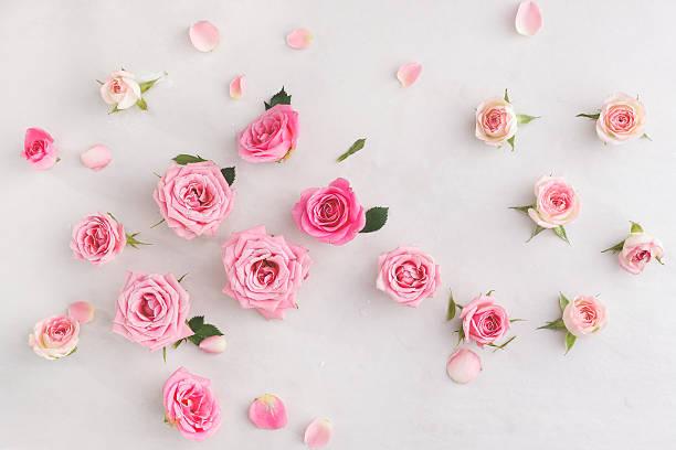 Assorted roses heads picture id510850422?b=1&k=6&m=510850422&s=612x612&w=0&h=vbxbxa7yi 39zqqvbrtz m8 sexg9cyxyirbncgccoq=