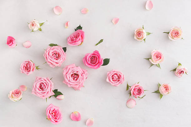 Royalty free rose flower pictures images and stock photos istock pink rose flowers arrangement stock photo assorted roses heads stock photo mightylinksfo