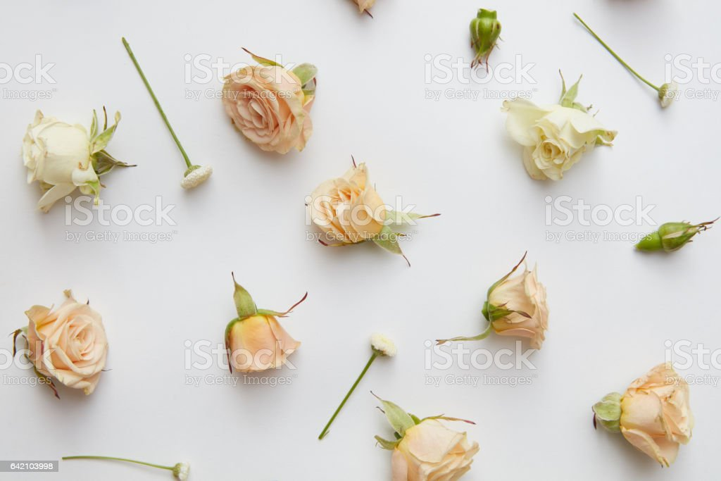 Assorted roses heads. stock photo