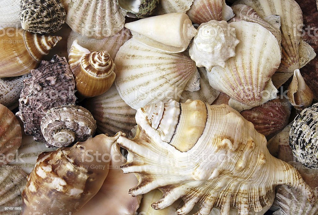 Assorted seashells royalty-free stock photo
