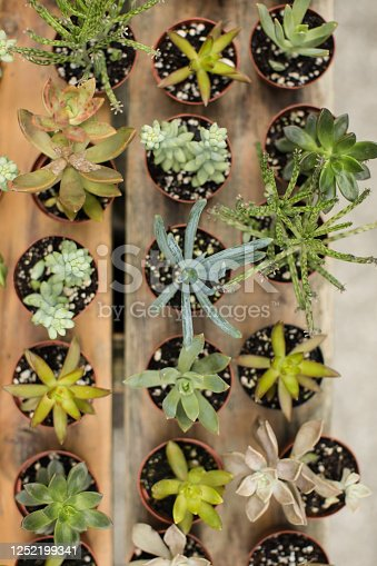 Soft assorted succulent plants in West Palm Beach, Florida. The photo was taken outdoors in bright natural light with a rustic wood background.