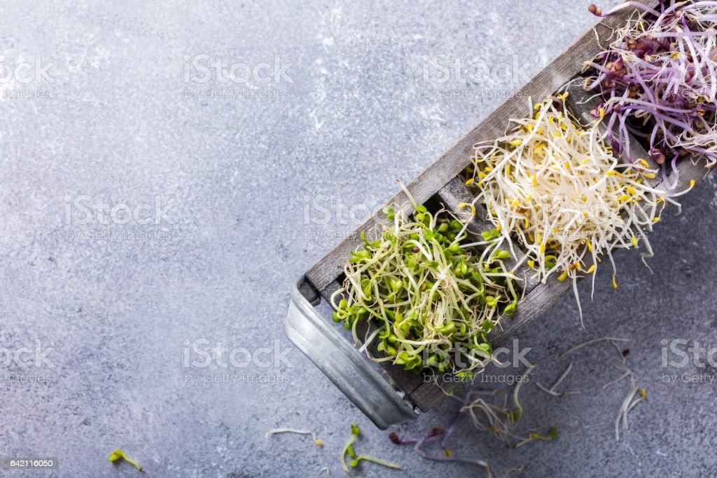 Assorted vegetable sprouts stock photo