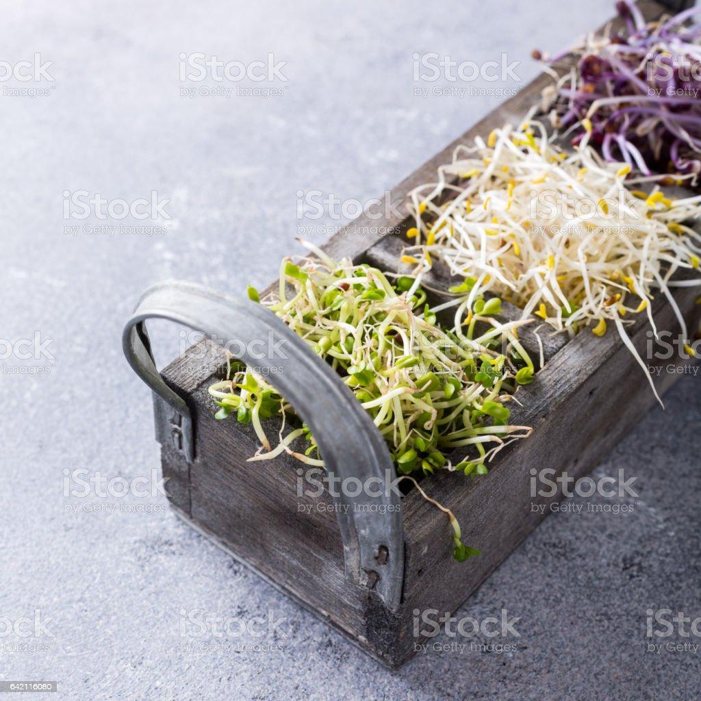 Sortierte Keimgemüse – Foto