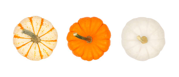 assortment of autumn pumpkins, top view isolated on white - pumpkin zdjęcia i obrazy z banku zdjęć