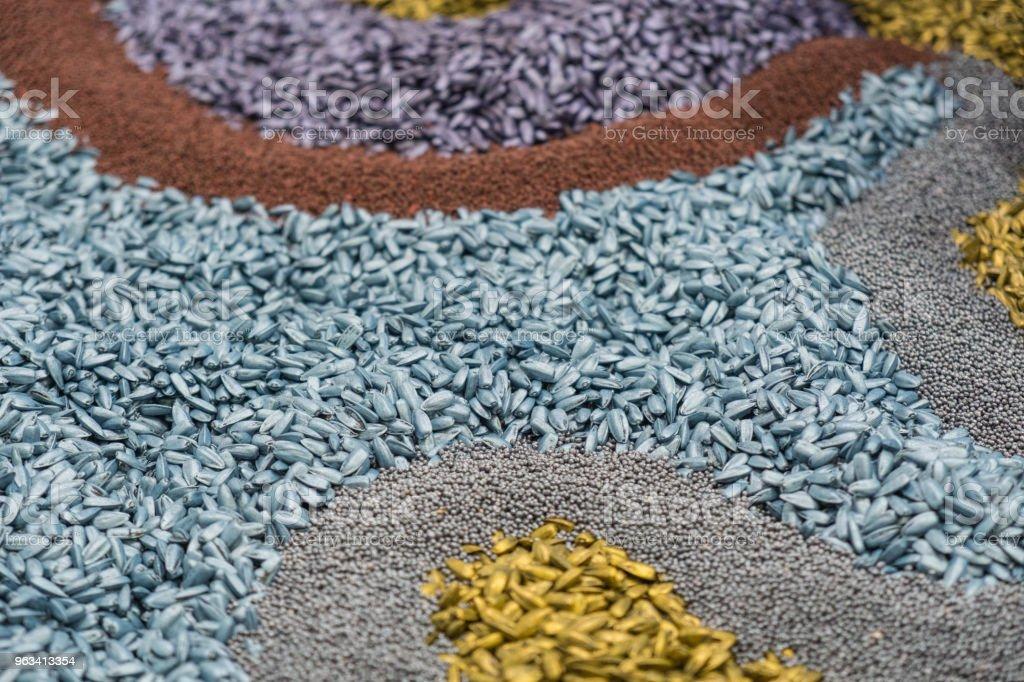 Sortiment av färgglada korn och spannmål - Royaltyfri Alternativ Bildbanksbilder
