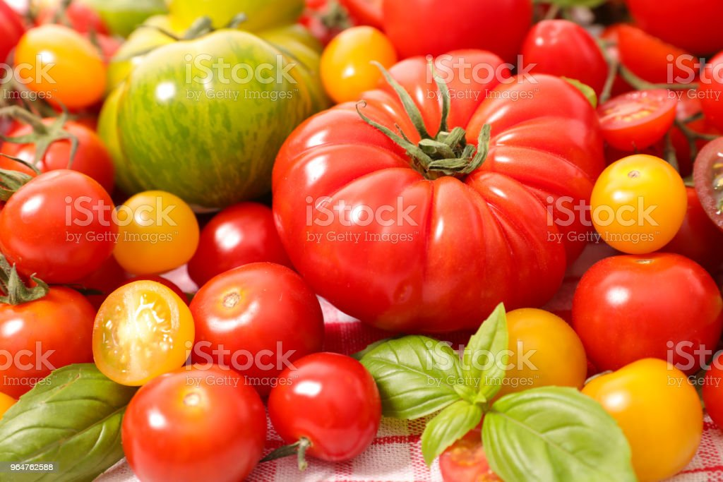 assortment of colorful tomatoes royalty-free stock photo