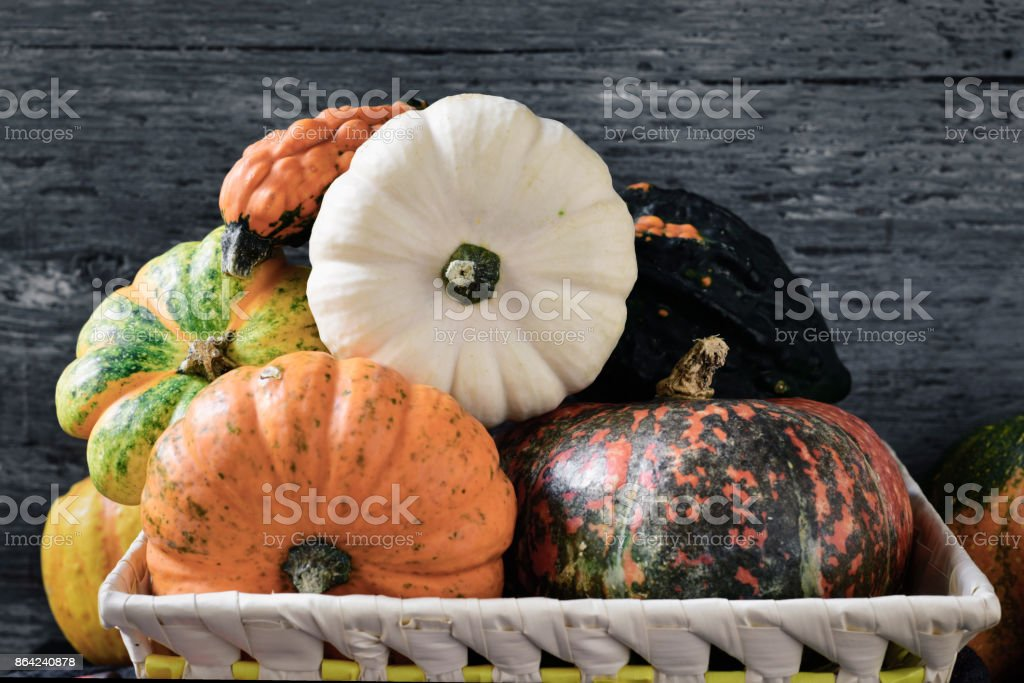 assortment of different pumpkins royalty-free stock photo