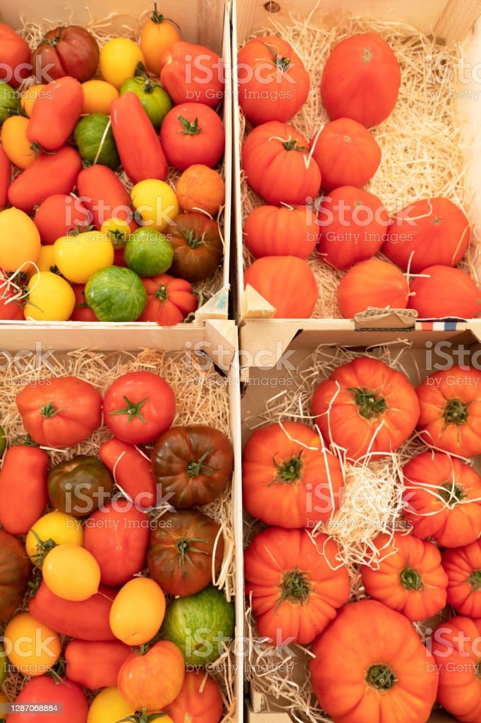 Assortment of red and yellow tomatoes on a market stall Many varieties of tomatoes in 4 vertical crates. Agriculture Stock Photo