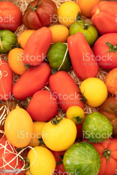 Assortment Of Red Green And Yellow Tomatoes Stock Photo - Download Image Now