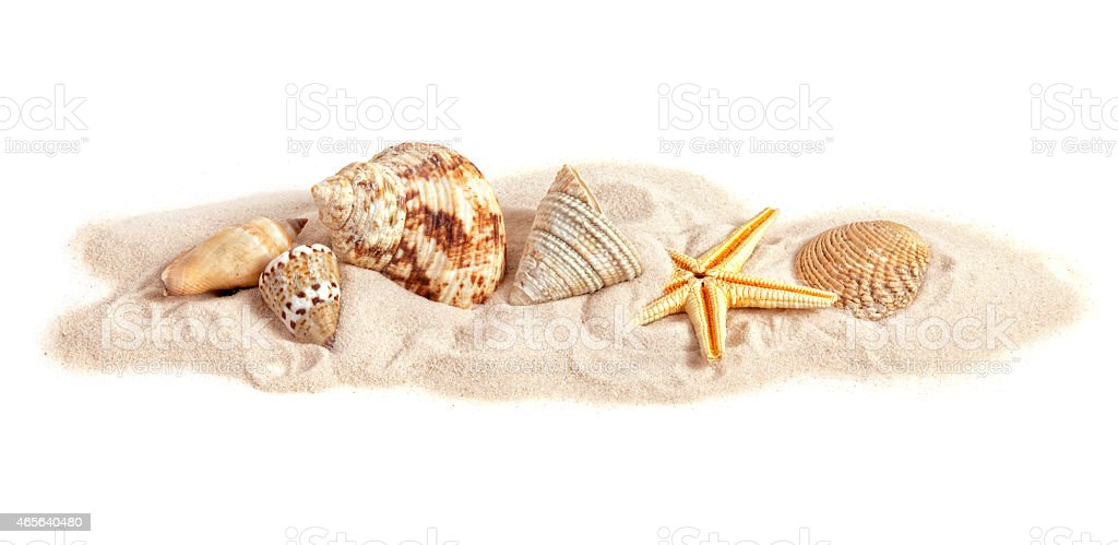 Assortment of seashells on small strip of sand, white background stock photo