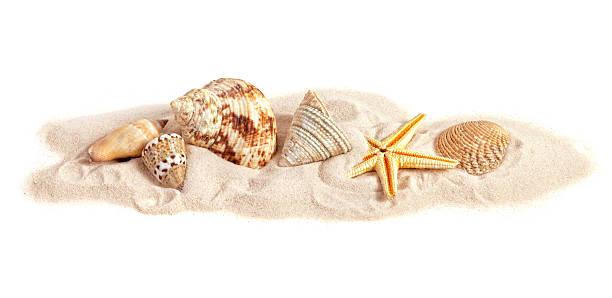 assortiment de coquillages sur petite bande de sable blanc arrière-plan - coquillage photos et images de collection