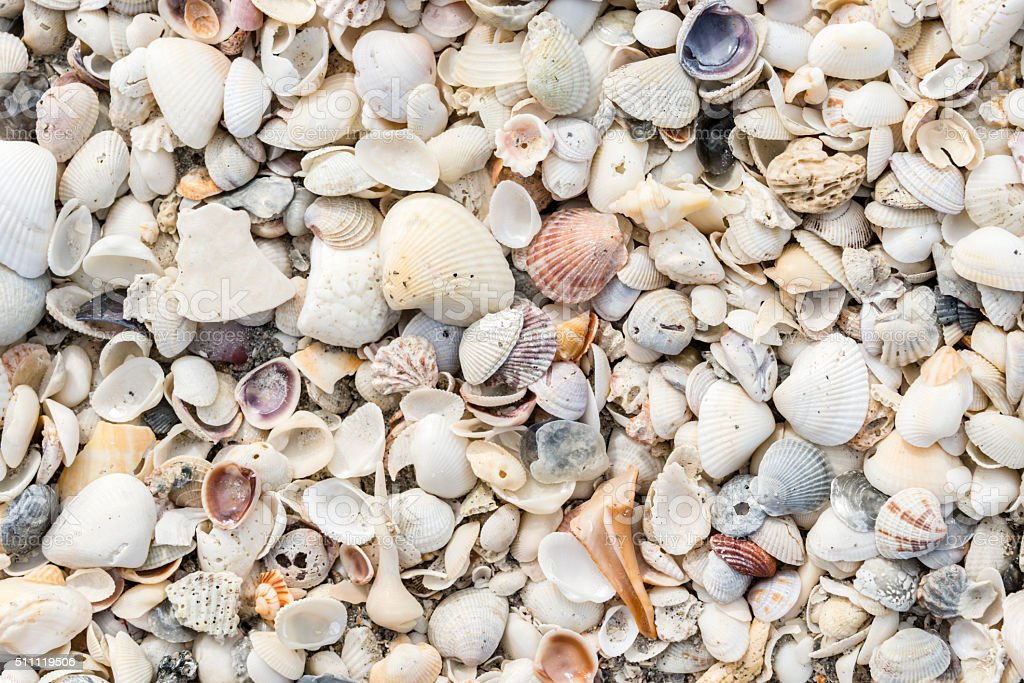 Assortment of seashells on the beach stock photo