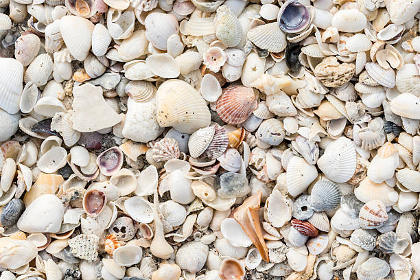 assortment of seashells on the beach - zeeschelp stockfoto's en -beelden
