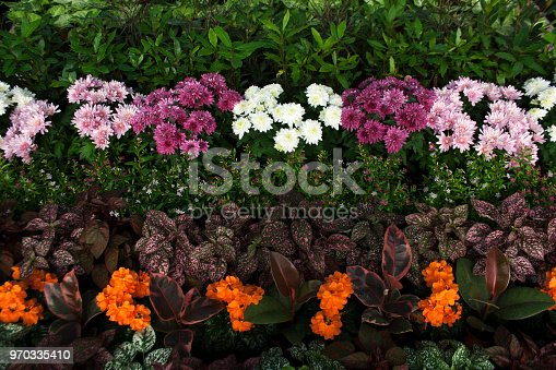 Aster flowers, fittonia and other garden plants from a high angle view