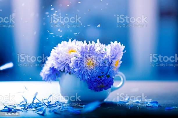 Aster flowers in a vase picture id616875994?b=1&k=6&m=616875994&s=612x612&h=qwxeqvpvowlrivi8cnbnbg5tr pawko0ifplmuj9uqm=