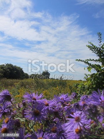 istock Aster Nature Background 514655339