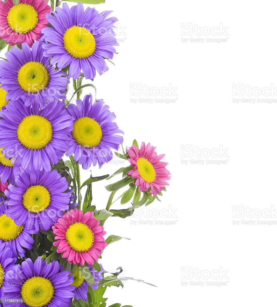 Asterdaisy border stock photo more pictures of aster istock asterdaisy border xl royalty free stock photo izmirmasajfo Image collections