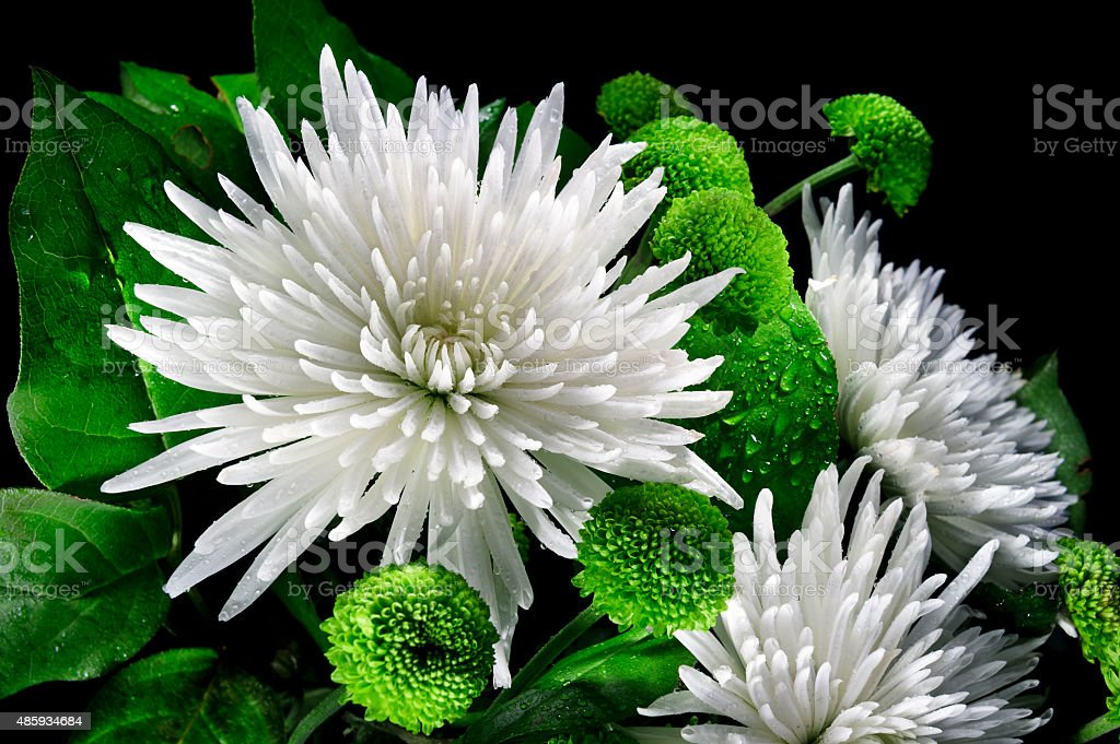 Asters and chrysanthemums stock photo