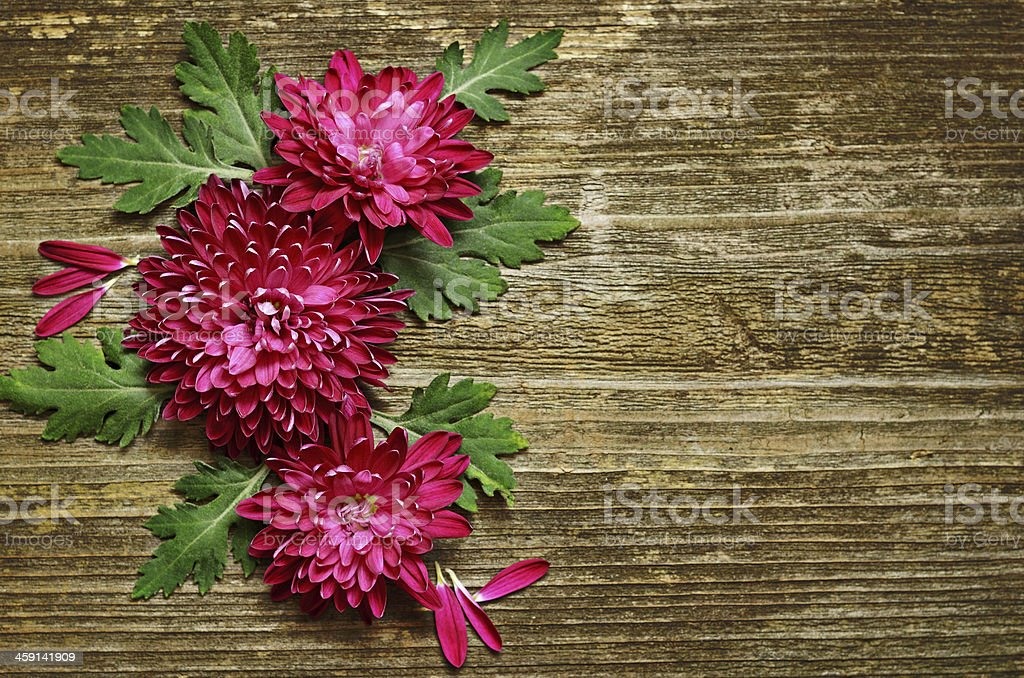 Asters  composition on wooden background royalty-free stock photo