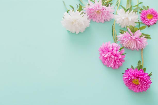 Astern Blumen auf grünem Hintergrund – Foto