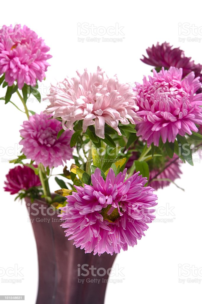 Asters in vaze stock photo