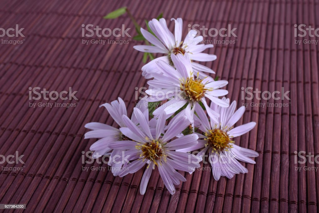 Asters on bamboo background Chinese still life Aster Stock Photo