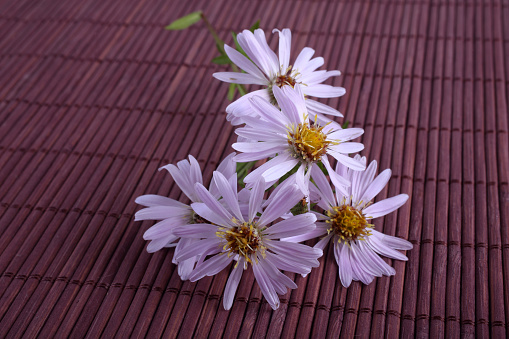 Asters On Bamboo Background Stock Photo - Download Image Now