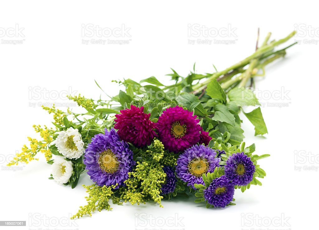 Asters stock photo