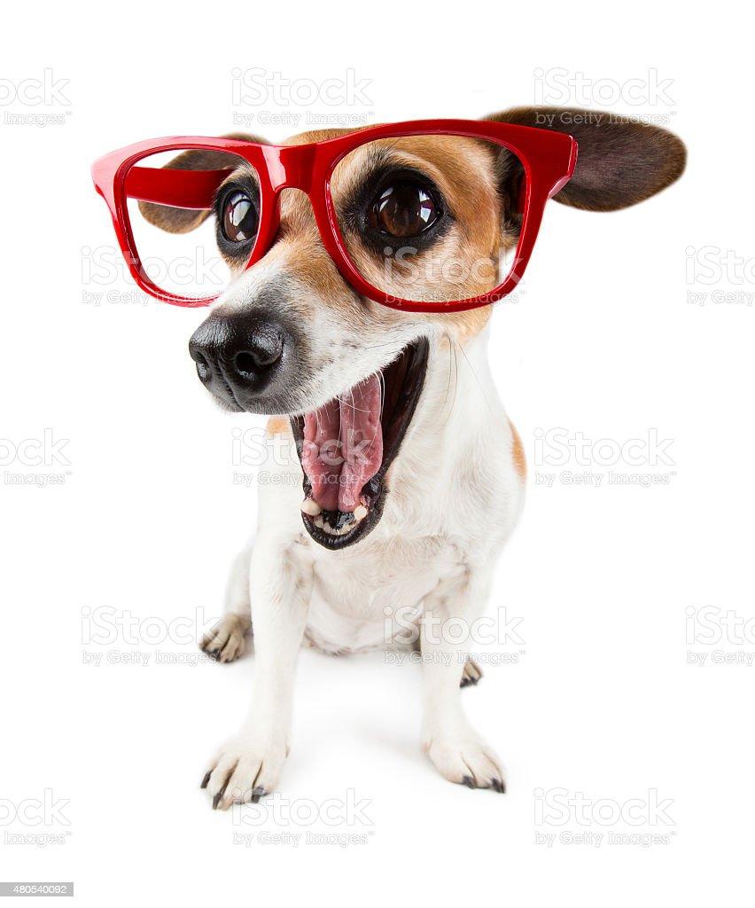 astonished funny dog with big eyes stock photo