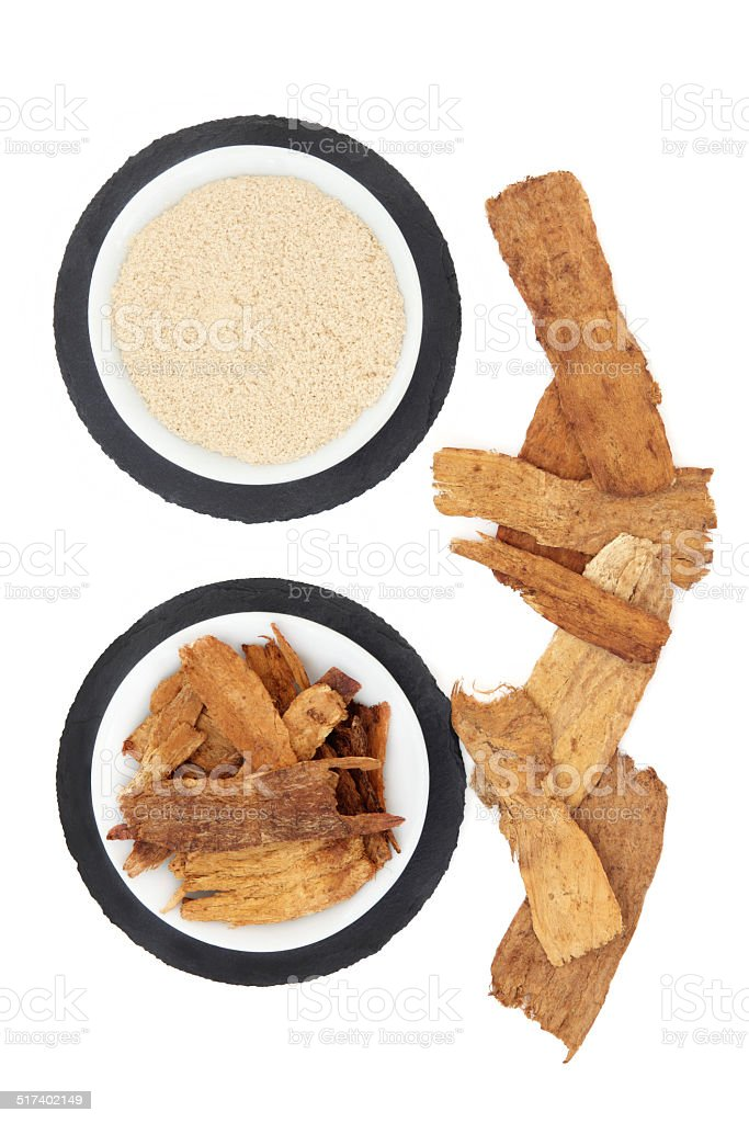 Astragalus Herb stock photo