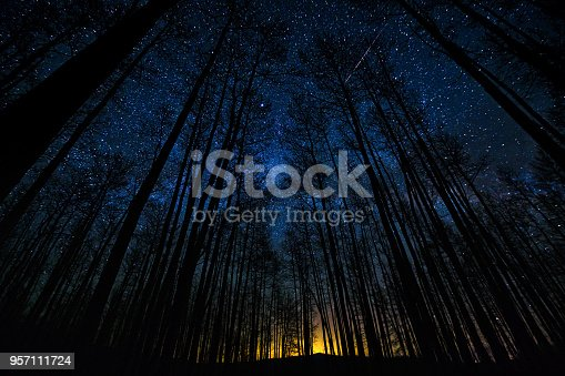 Astro Landscape Tree Silhouettes in Forest Milky Way Scenic  - Galaxy and bright stars with mountain backdrop.