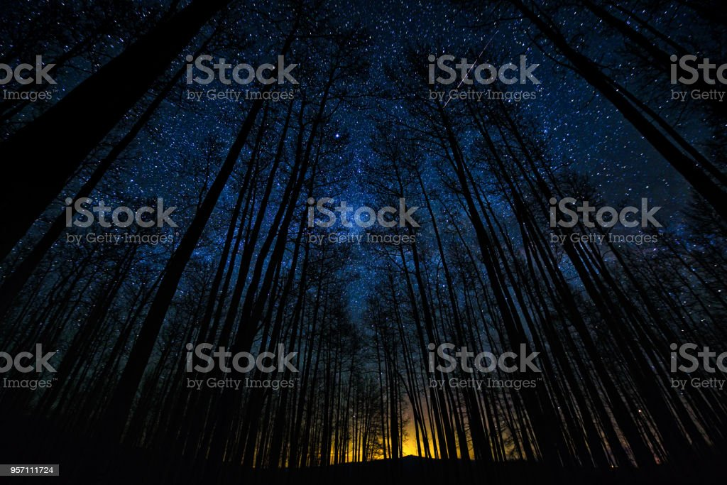 Astro Landscape Tree Silhouettes in Forest Milky Way Scenic stock photo