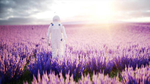 Astronaut with butterflies in lavender field. concept of future. broadcast. 3d rendering. stock photo