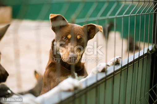 Asylum for dogs, homeless dogs in a cage in animal shelter. Abandoned animal in captivity