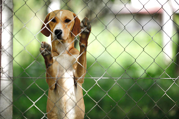 Asylum for dogs picture id520690555?b=1&k=6&m=520690555&s=612x612&w=0&h=sjxj9dm8qhm0afbiw1kq6sec azcgsifuxjq2ojpb7i=