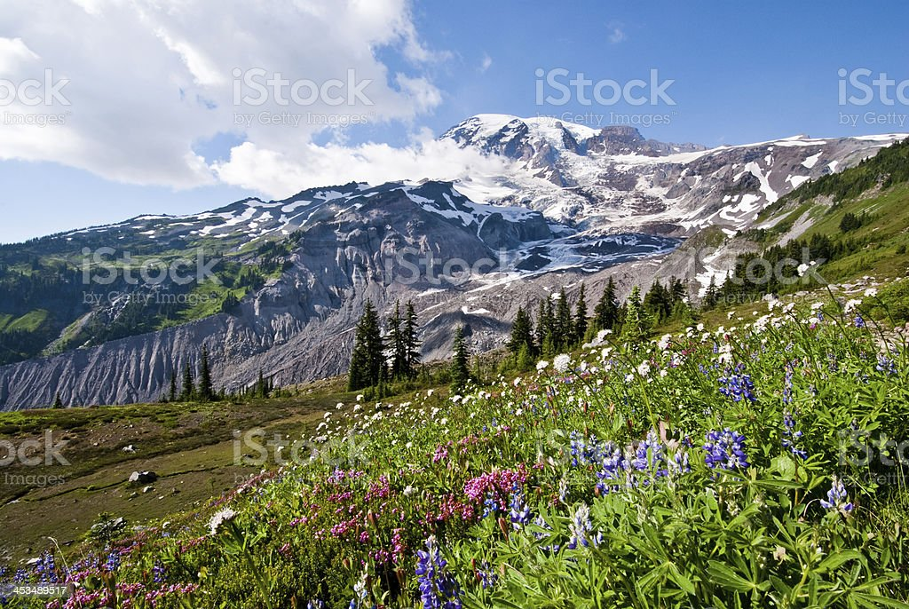Wildflowers Along the Nisqually Glacier Moraine stock photo