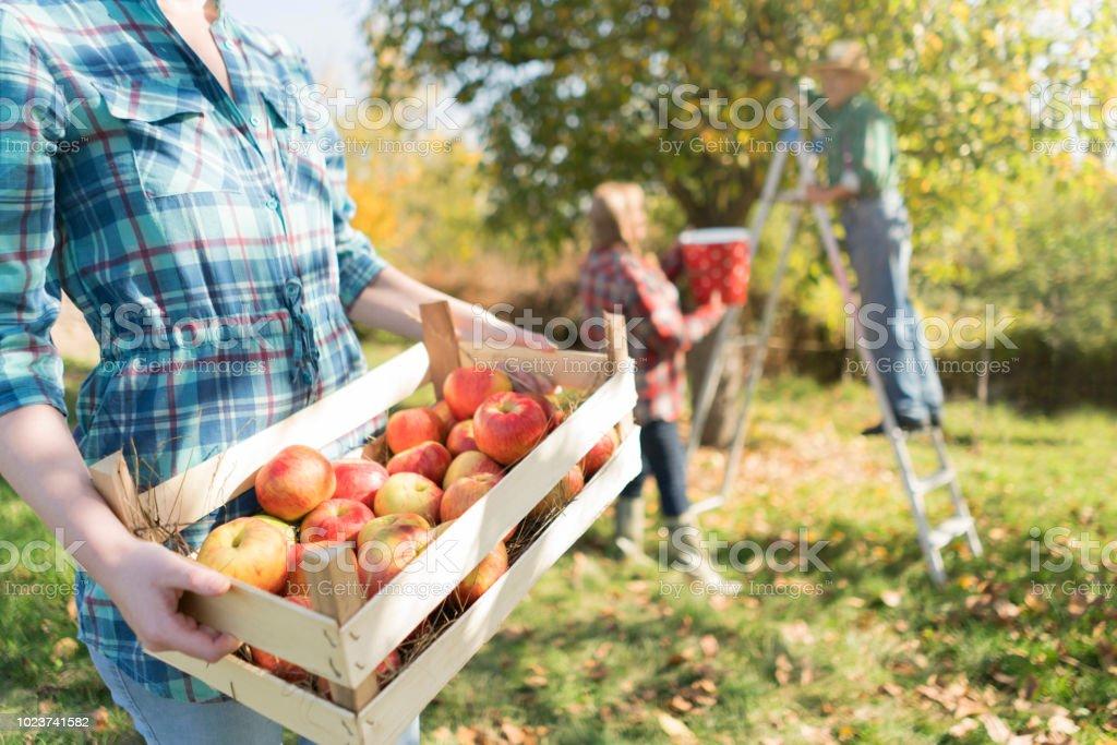 Op een familieboerderij - Royalty-free Agrarisch beroep Stockfoto
