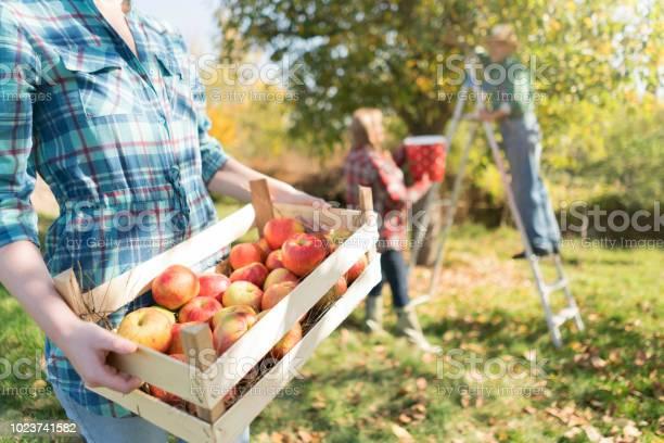 Op Een Familieboerderij Stockfoto en meer beelden van Agrarisch beroep