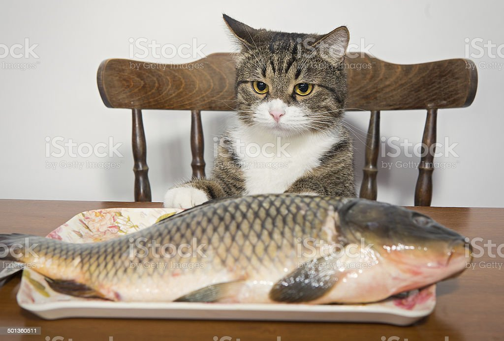 Сat and the fish stock photo