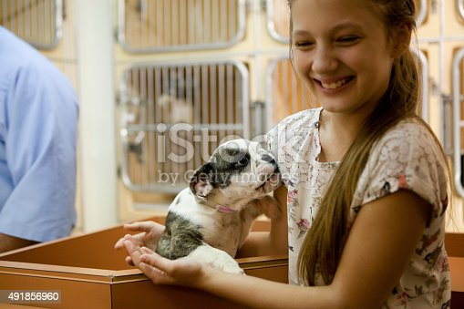 istock At animal adoption centre 491856960