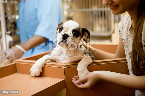 istock At animal adoption centre 494829924