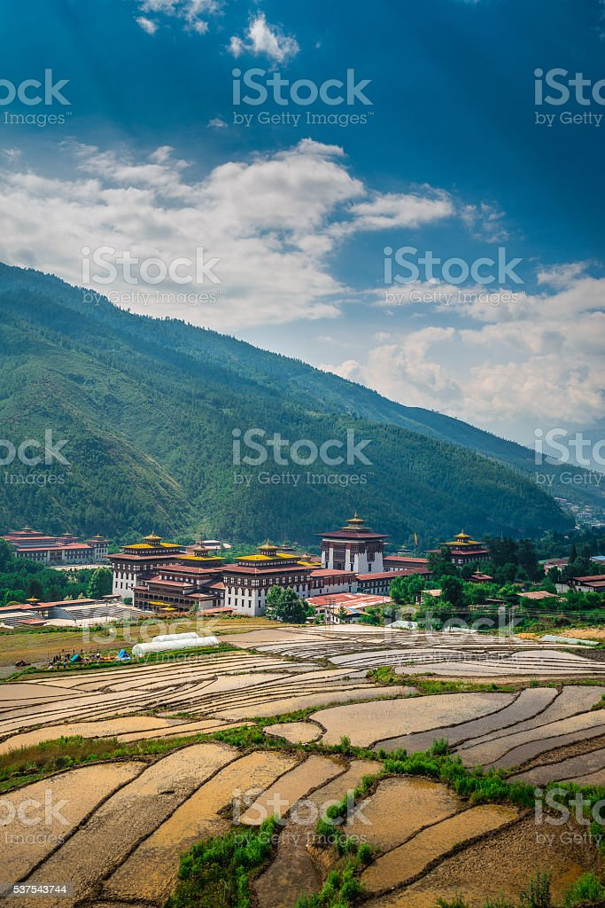 PADDY FIELD at Bhutan stock photo