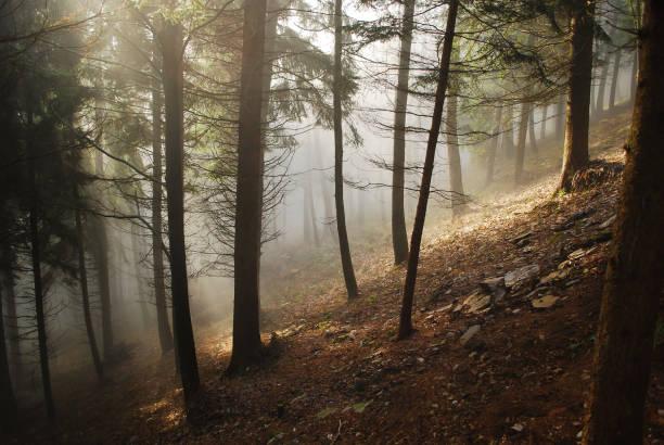 in der Morgendämmerung in den Wäldern von den Dolomiten – Foto