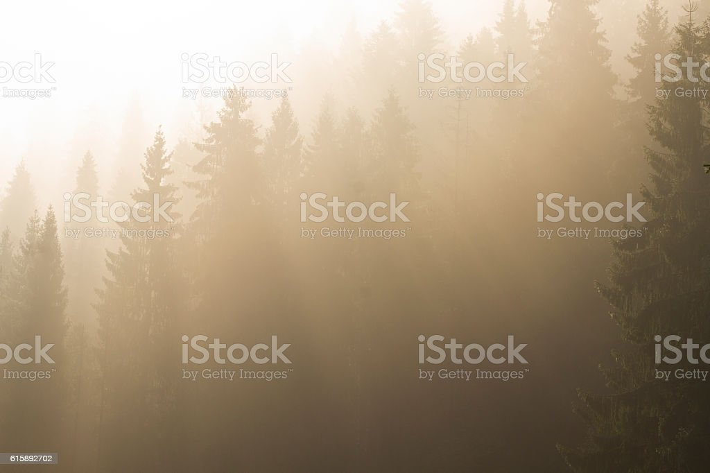 at morning dawn mist over forest in mountains stock photo