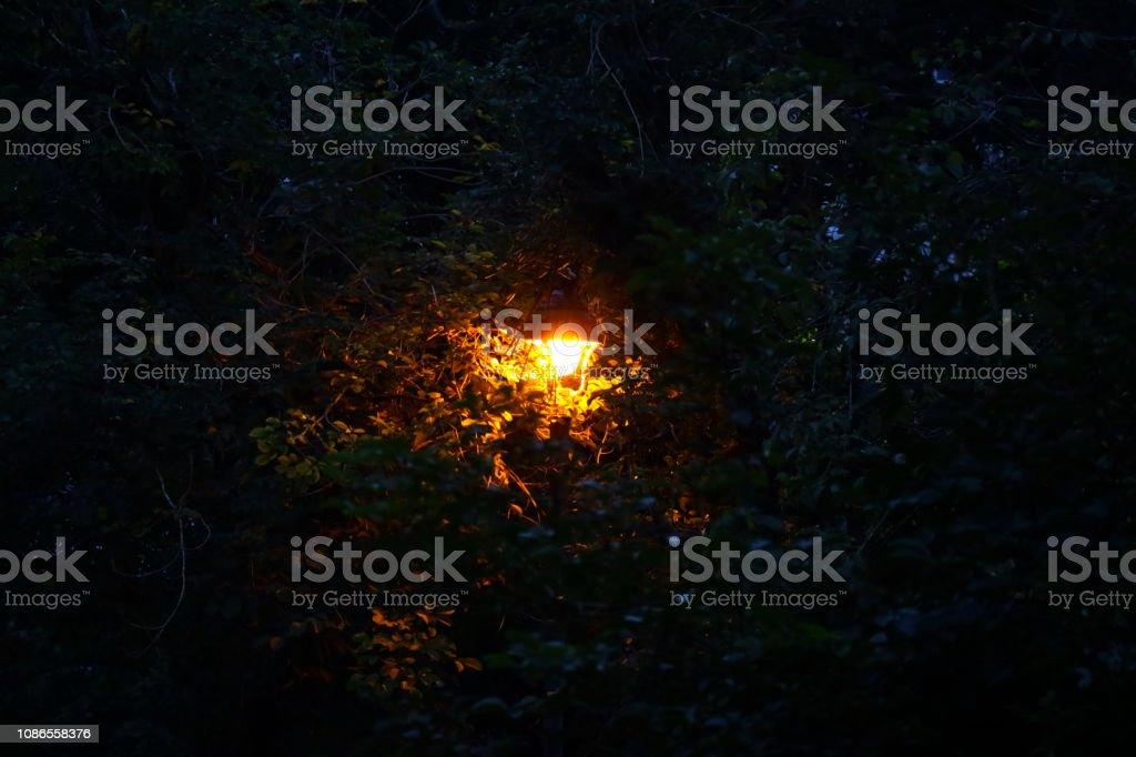 At night, in a dark green wood, I saw orange lights hidden in it....